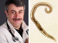 الدكتور كوماروفسكي عن الديدان عند الأطفال