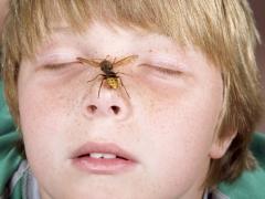 Hoe zwelling en jeuk bij een kind te verwijderen na een insectenbeet?