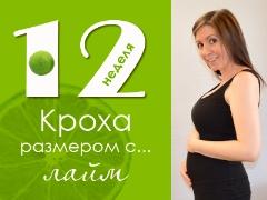 12 أسبوعًا من الحمل: ماذا يحدث للجنين والأم الحامل؟