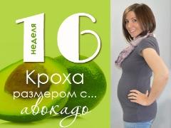 16 สัปดาห์ของการตั้งครรภ์จะเกิดอะไรขึ้นกับทารกในครรภ์และแม่ที่คาดหวัง