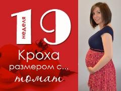 19 أسبوعًا من الحمل: ماذا يحدث للجنين والأم الحامل؟