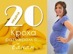 20 minggu kehamilan: apa yang berlaku kepada janin dan ibu hamil?