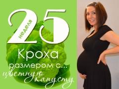 25 أسبوعًا من الحمل: ماذا يحدث للجنين والأم الحامل؟