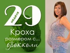 29 أسبوعًا من الحمل: ماذا يحدث للجنين والأم الحامل؟