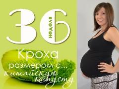 36 أسبوعًا من الحمل: ماذا يحدث للجنين والأم الحامل؟
