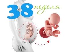 الجنين في الأسبوع 38 من الحمل: القواعد والخصائص