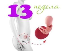 تطور الجنين في الأسبوع الثالث عشر من الحمل
