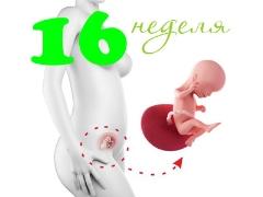 تطور الجنين في الأسبوع السادس عشر من الحمل