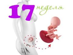 تطور الجنين في الأسبوع السابع عشر من الحمل