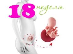 تطور الجنين في الأسبوع الثامن عشر من الحمل