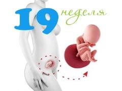 تطور الجنين في الأسبوع التاسع عشر من الحمل