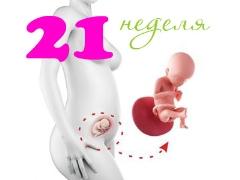 تطور الجنين في الأسبوع الحادي والعشرين من الحمل