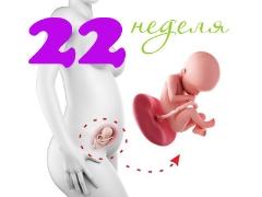 Perkembangan janin pada usia 22 minggu