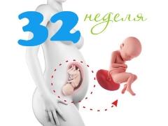 Perkembangan janin pada usia 32 minggu