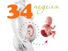 تطور الجنين في الأسبوع 34 من الحمل