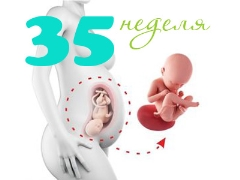 تطور الجنين في الأسبوع الخامس والثلاثين من الحمل