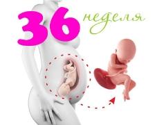تطور الجنين في الأسبوع 36 من الحمل