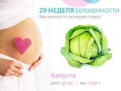 تطور الجنين في الأسبوع التاسع والعشرين من الحمل