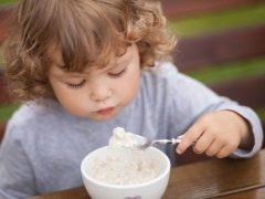 متى يتم إدخال عصيدة الحليب في العلف وما الأفضل اختياره؟