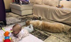 Președintele TV Svetlana Zeynalova îi învață pe fiica ei de opt luni să iubească animalele
