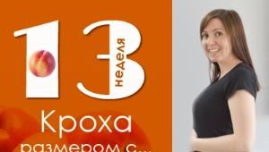 13 أسبوعًا من الحمل: ماذا يحدث للجنين والأم الحامل؟