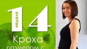 14 أسبوعًا من الحمل: ماذا يحدث للجنين والأم الحامل؟