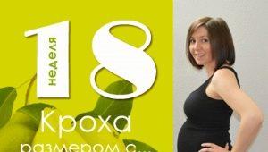 18 minggu kehamilan: apa yang berlaku kepada janin dan ibu hamil?
