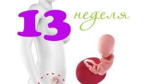 Perkembangan janin pada minggu ke-13 kehamilan