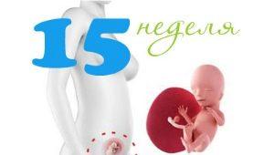 Perkembangan janin pada minggu ke-15 kehamilan
