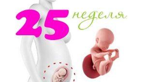 Perkembangan janin pada minggu ke-25 kehamilan