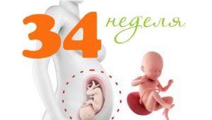 Perkembangan janin pada usia 34 minggu