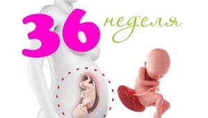 Perkembangan janin pada kehamilan 36 minggu