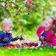 คุณให้เชอร์รี่หวานแก่เด็กเมื่ออายุเท่าไหร่