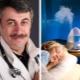 Dr Komarovsky mengenai cara memilih humidifier