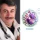 الدكتور كوماروفسكي عن الحمضات