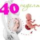 الجنين في 40 أسبوعا من الحمل: القواعد والخصائص