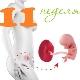 Perkembangan janin pada minggu ke-11 kehamilan
