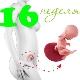 Perkembangan janin pada kehamilan minggu ke-16