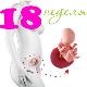 Perkembangan janin pada minggu ke-18 kehamilan
