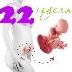 تطور الجنين في الأسبوع 22 من الحمل