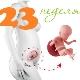Perkembangan janin pada usia kehamilan 23 minggu