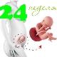 تطور الجنين في الأسبوع 24 من الحمل