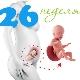 تطور الجنين في الأسبوع السادس والعشرين من الحمل