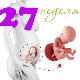 تطور الجنين في الأسبوع السابع والعشرين من الحمل