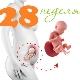 تطور الجنين في الأسبوع الثامن والعشرين من الحمل