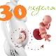 تطور الجنين في الأسبوع 30 من الحمل