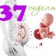 Perkembangan janin pada usia 37 minggu
