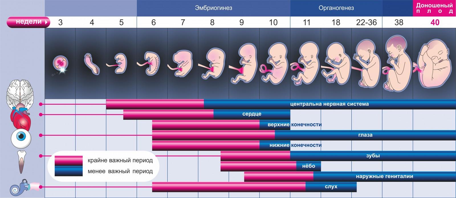 Bagaimana Untuk Mengira Usia Kehamilan Dengan Tarikh Konsepsi Pengiraan Bagaimana Untuk Menentukan Dan Mengetahui Istilah Pada Hari Dari Konsepsi Bagaimana Untuk Mengira