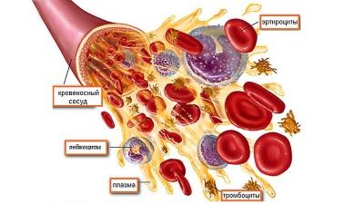 كريات الدم الحمراء ، الكريات البيض والصفائح الدموية