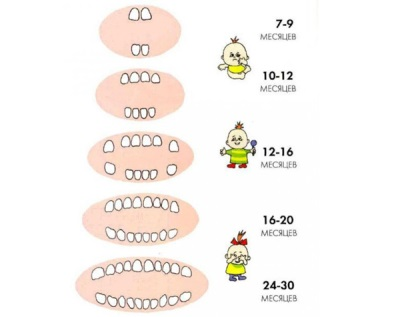 Gyermek fogai 2 év alatt